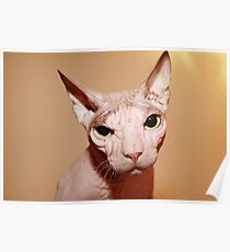 Hairless white cat. Poster