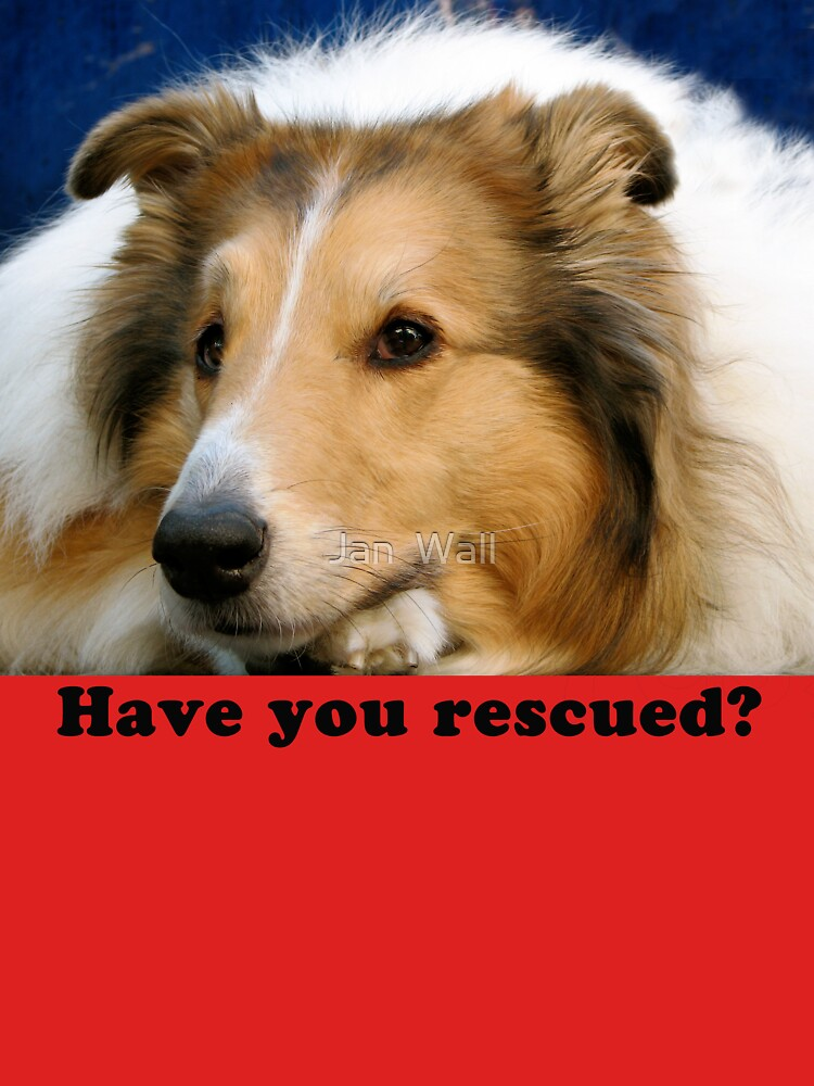Have You Rescued? by jwphotos