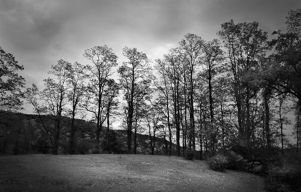 Spooner Hill in Black and White by John  Goodman