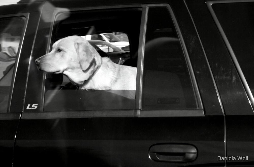 VIP on Board! by Daniela Weil