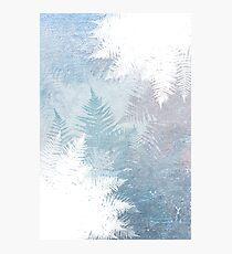 Fern Snowflakes - Winter Blues Photographic Print