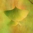 Gingko Love by Philippe Sainte-Laudy