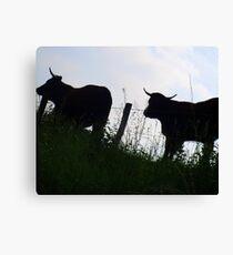 Cows against the light Canvas Print