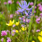 Little Flowers on the Prairie by Jason Weigner