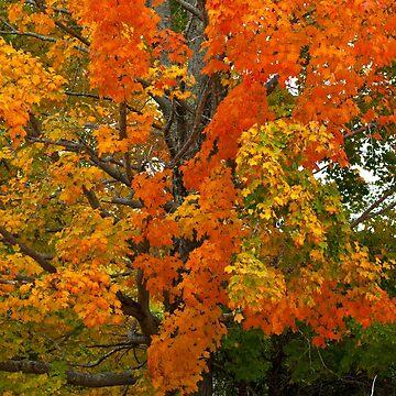 Orange & Yellow Tree by srwdesign