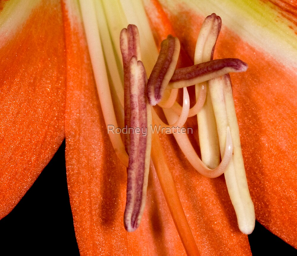Stamens of a Flower by Rodney Wratten