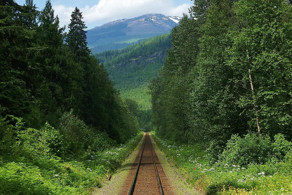 wildflower railway by roger smith