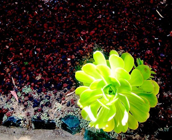 succulent 3 by SamanthaJune