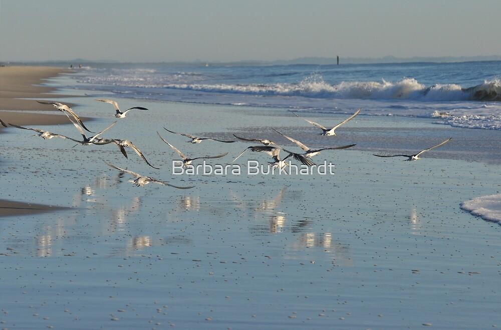 Taking to the Sky over Woorim Beach by Barbara Burkhardt