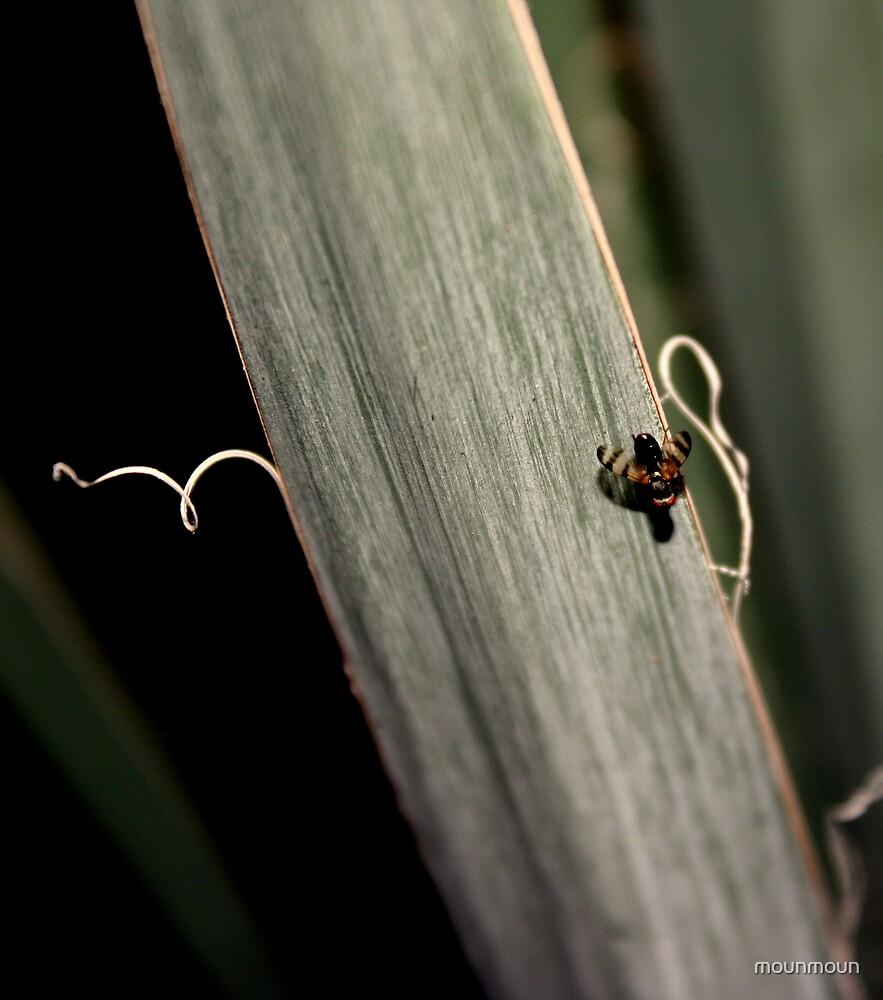 Flies That might Bite by mounmoun