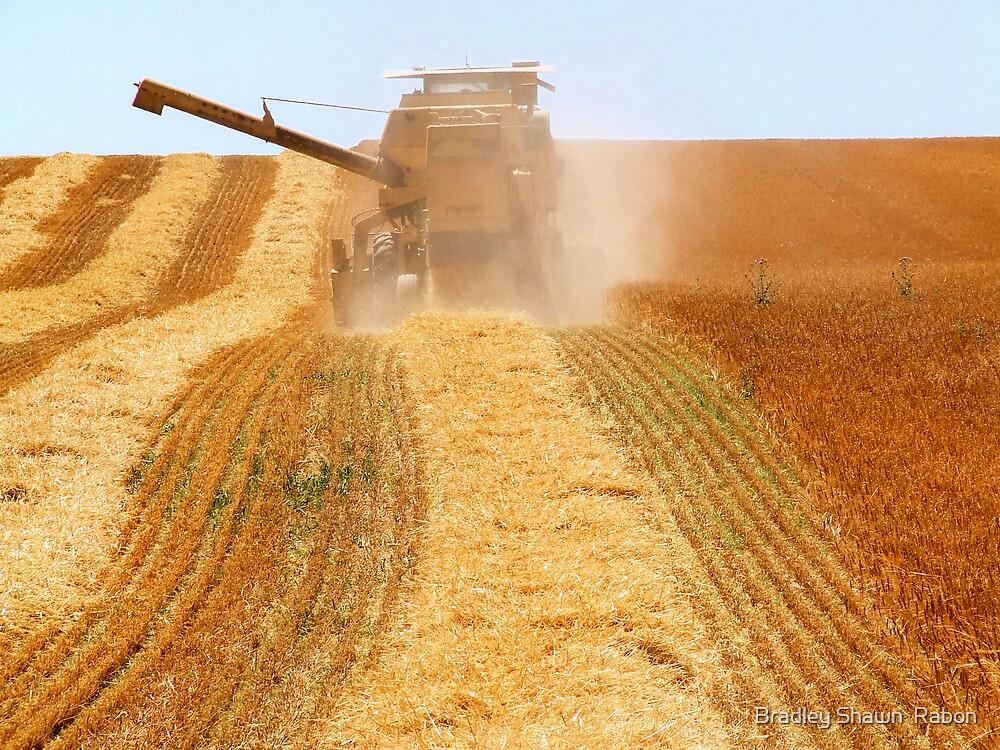 """Bringing in the Harvest"" by Bradley Shawn  Rabon"