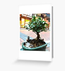 Hong Kong Bonsai Greeting Card