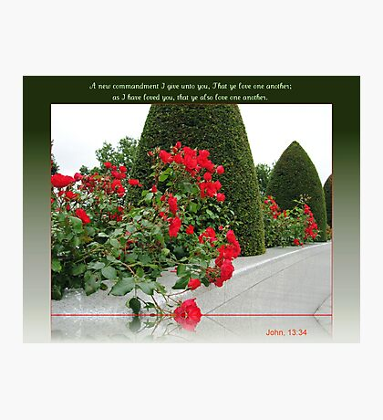Red Roses for Love Photographic Print