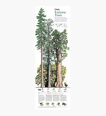 Infographic Poster - Extreme Trees Photographic Print