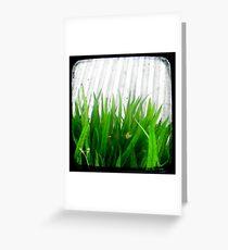 Green Green Grass Greeting Card