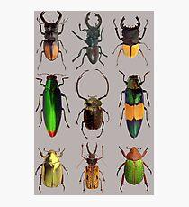 Beetles #2 Photographic Print