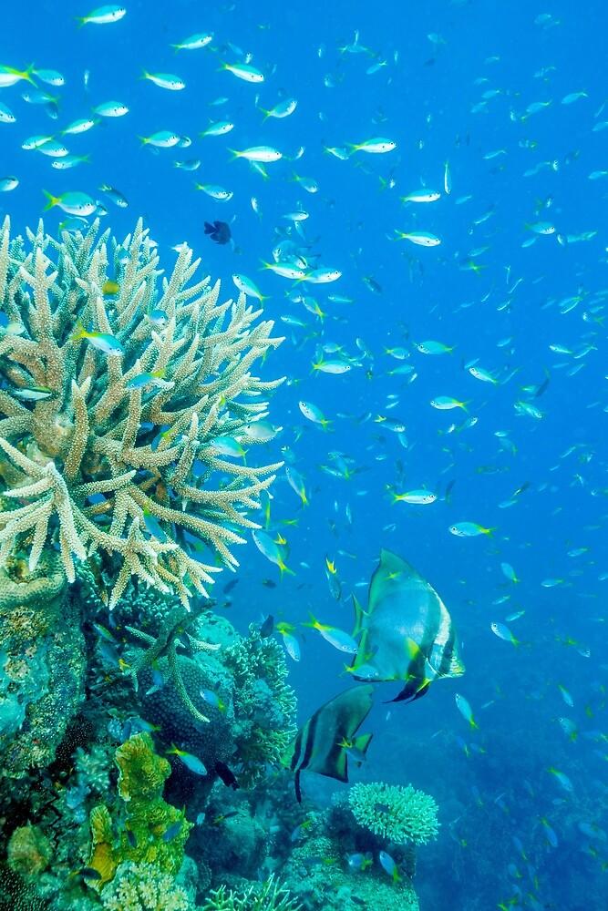 Reef scene by David Wachenfeld
