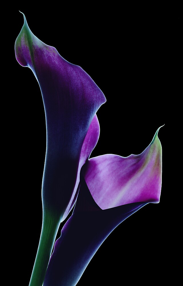 Midnight Callas by Marsha Tudor