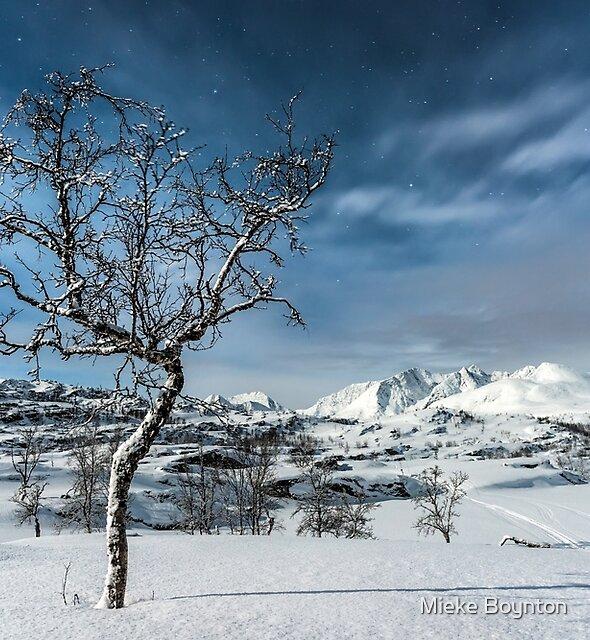 Moonlight Ride to Sikka by Mieke Boynton