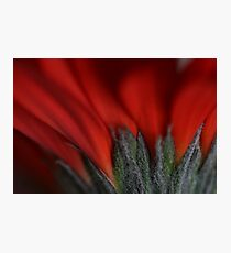 Red Imagination Photographic Print