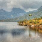 Lone Tree Cradle Mountain by Michael Matthews