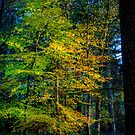 Autumnal Woodland by Dave Hare