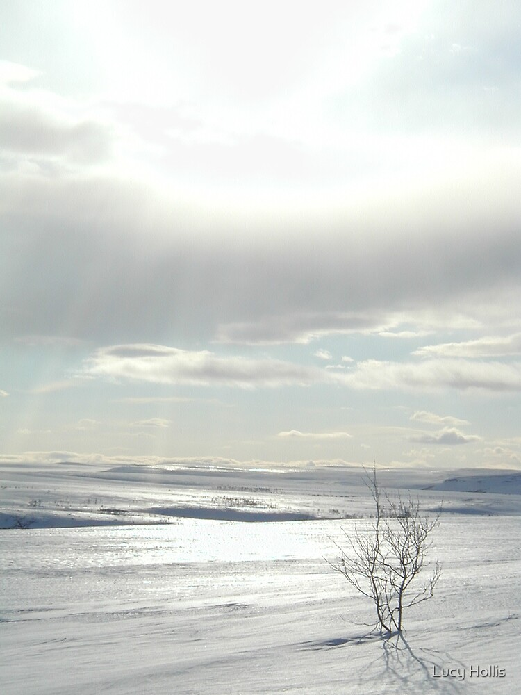 Arctic Light by Lucy Hollis