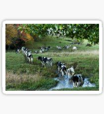 Dairy Cows of Vermont Sticker