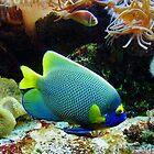 Marine Fish  by AnnDixon