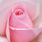 Pretty in Pink  by Michael Matthews