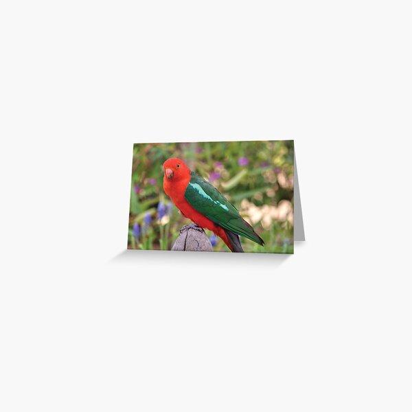 Australian King Parrot Greeting Card