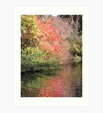 Autumn Red Reflected (Shrewsbury) Art Print