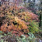 Golden Glory (Autumn at Dudmaston) by CreativeEm