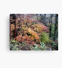 Golden Glory (Autumn at Dudmaston) Canvas Print