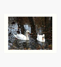 Dudmaston Swans (At Autumn) Art Print