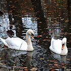 Dudmaston Swans (At Autumn) by CreativeEm