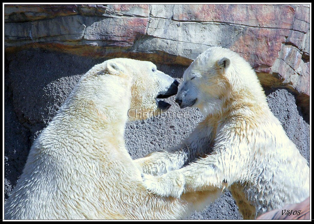 Polar Bear Love by Cherubtree