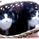 3 Katzen im Korb! von Gourmetkater