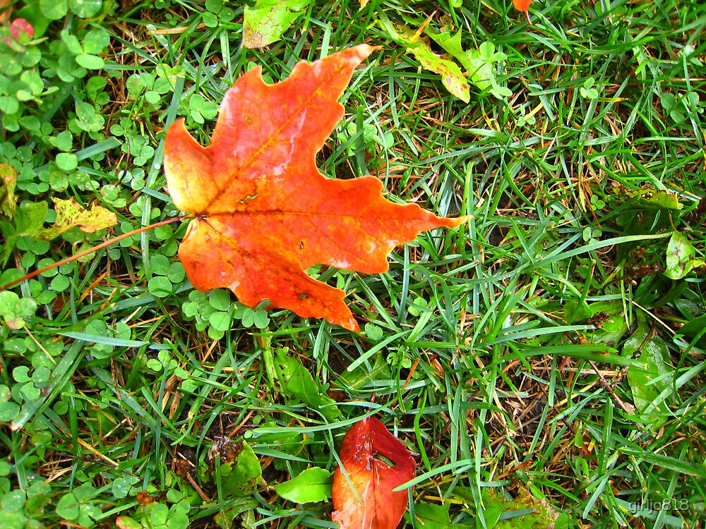 Red Leaf by girljo818