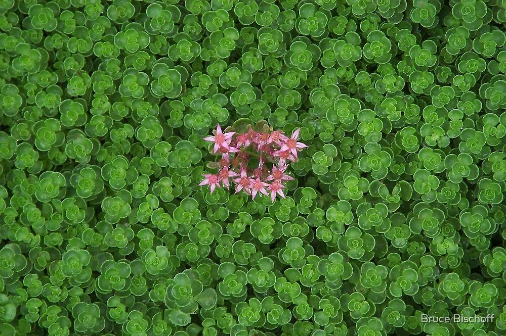 See dem bloom by Bruce Bischoff