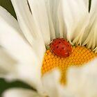 Ladybug  by mistyrose