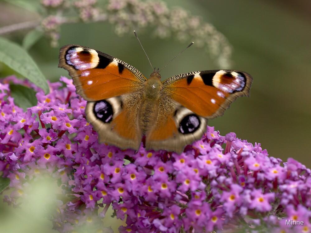 Peacock butterfly by Minne