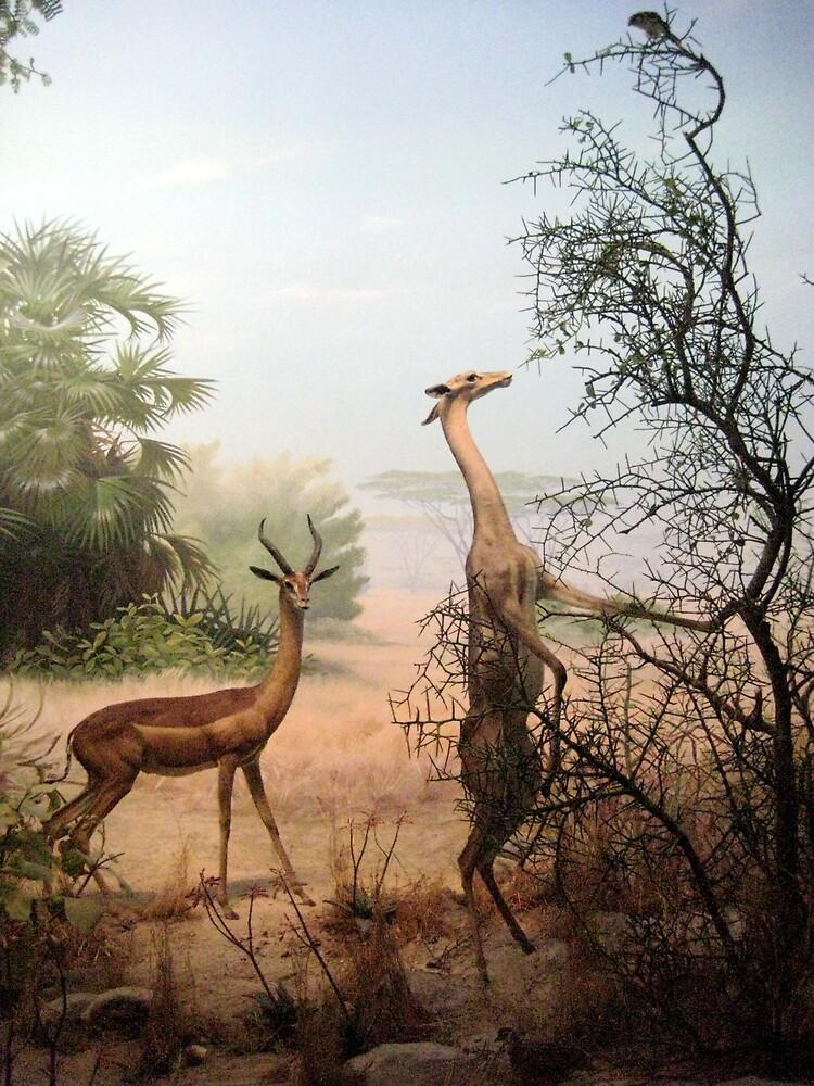Wild Animals by SamanthaJune