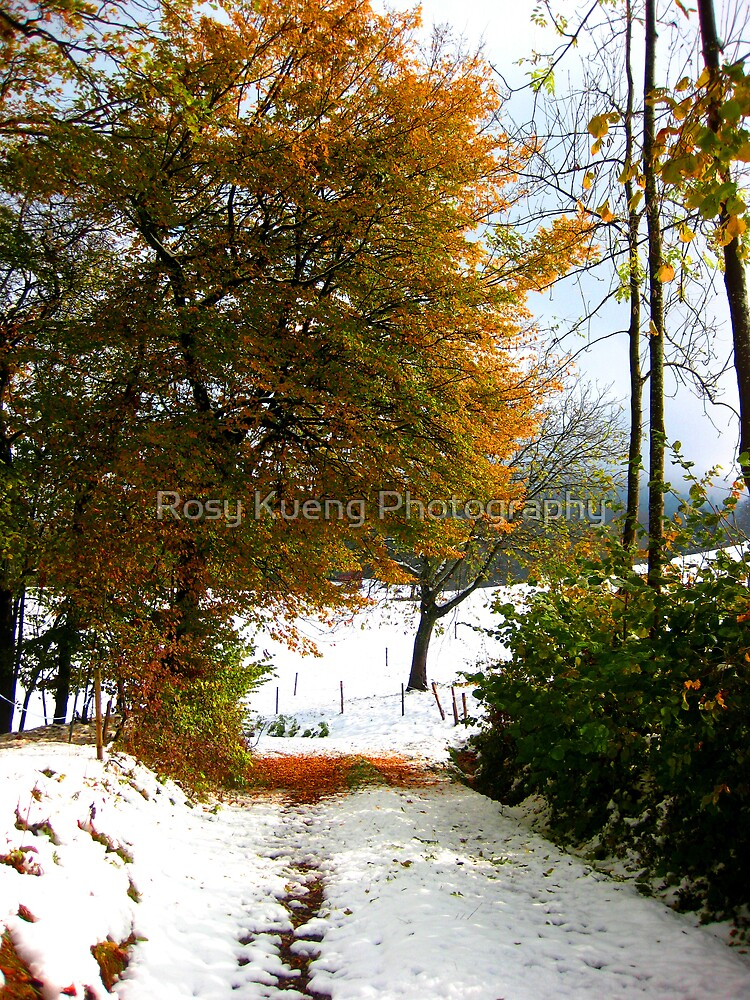 First Snow by Rosy Kueng Photography