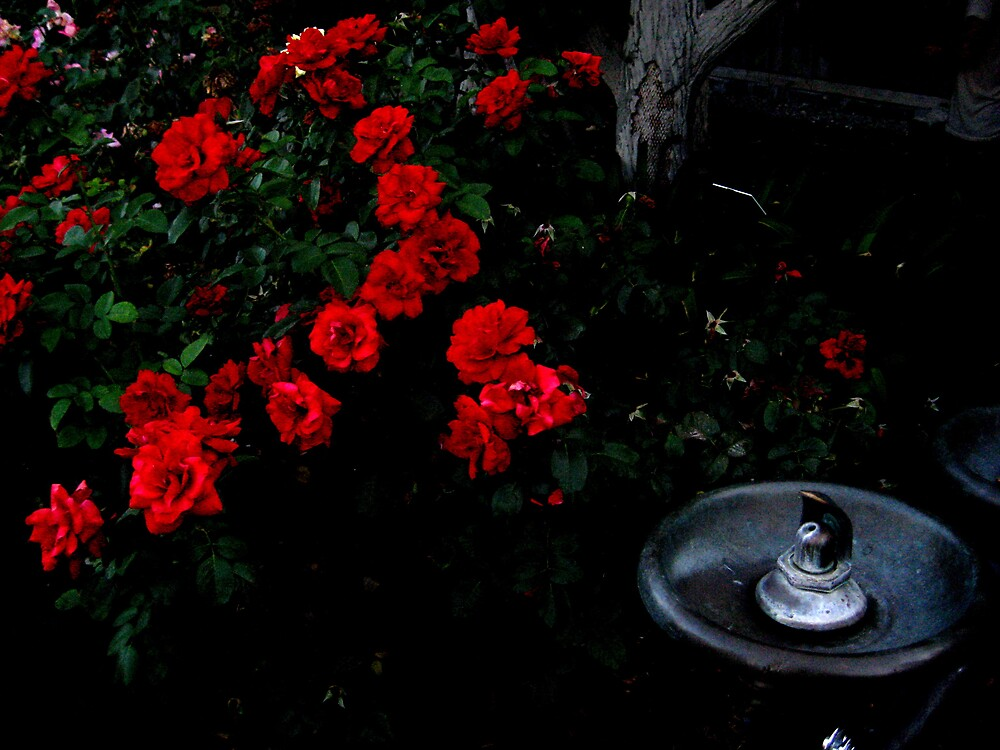 red rose fountain by SamanthaJune