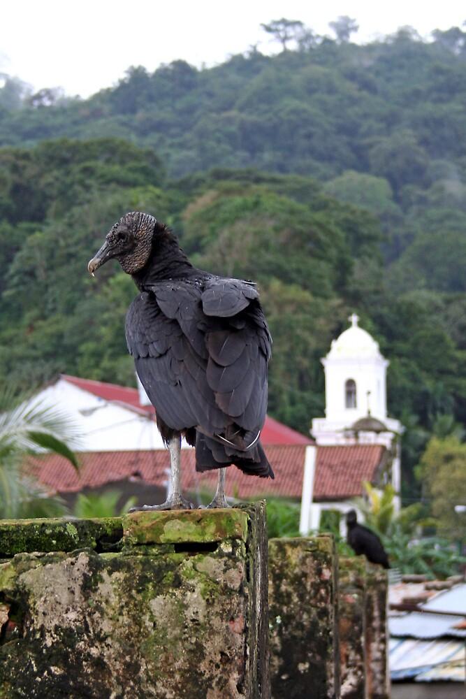 Vulture by Karen Millard