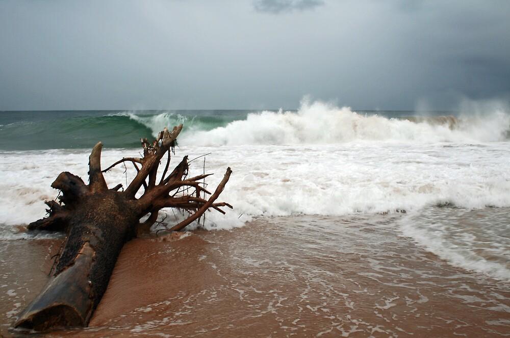 Driftwood! by Karen Millard