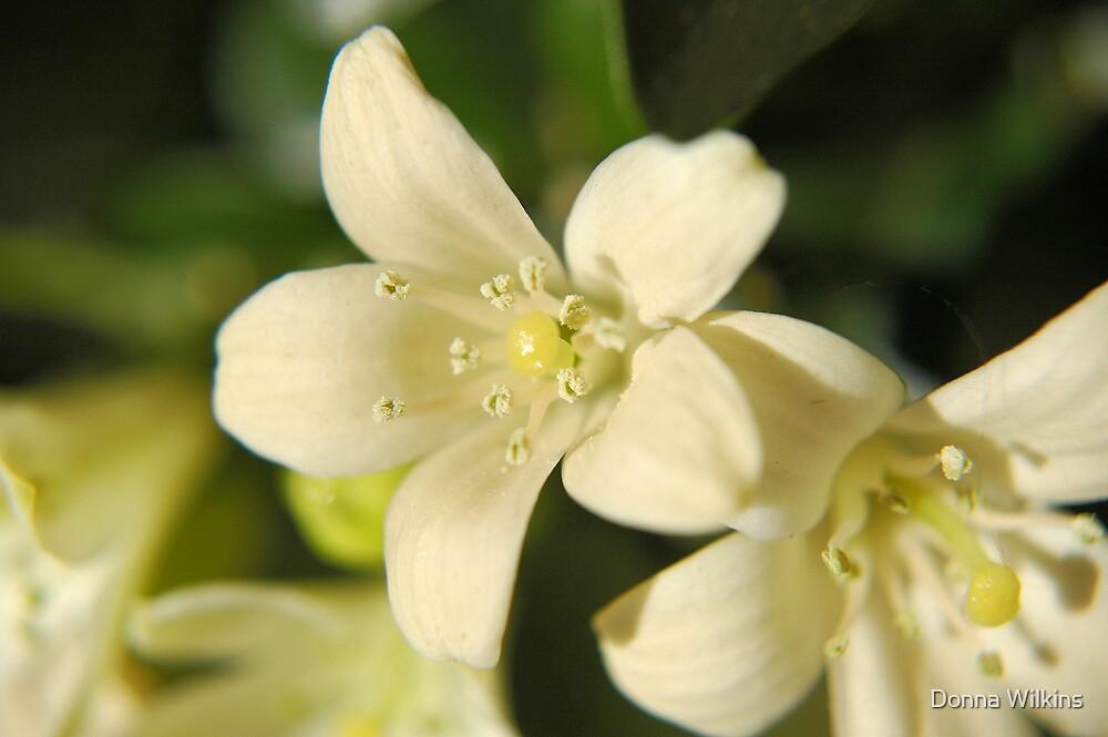Jasmine by Donna Wilkins