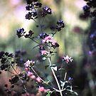 Blühender Oregano von Gourmetkater
