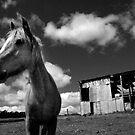 Rural by Matt Mawson